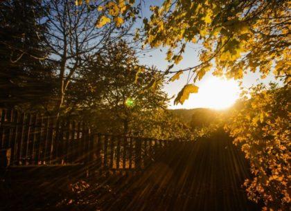 Fall-Leaves-e1477586549945-768x468